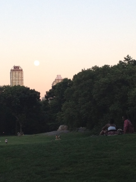 sheep meadow sunset